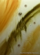 cuadros abstractos 80x60 codigo 1249 bastidor de 3 cms. ( VENDIDO )