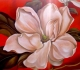"CUADROS MODERNOS ONLINE "" magnolio"""